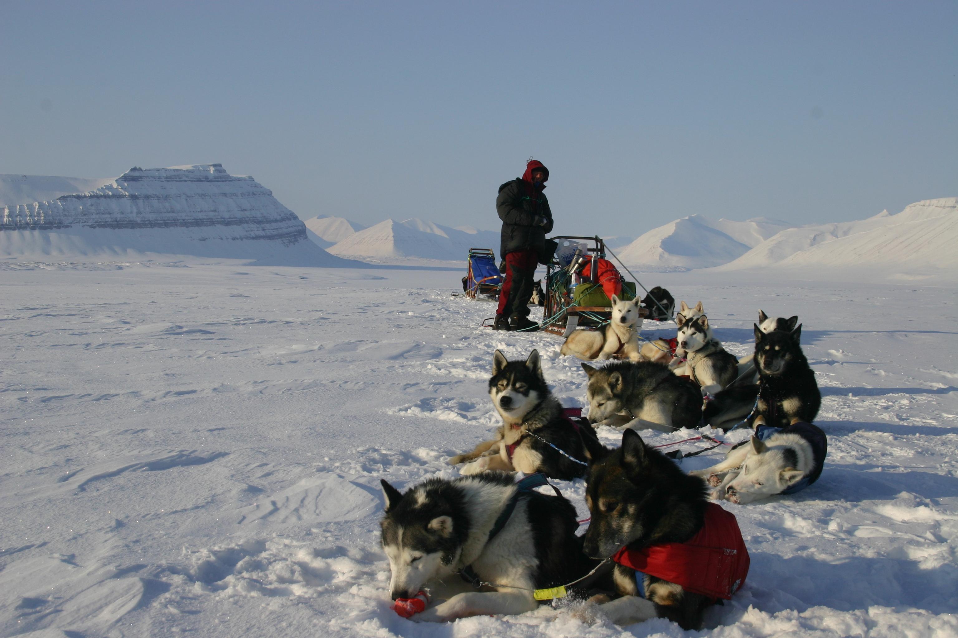 Dog teams having a break