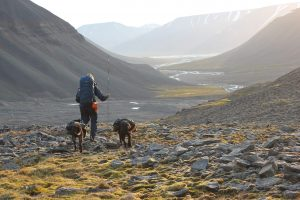 Hiking with pack dogs